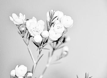康乃馨梅花仙鹤高清图片