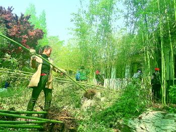 天下第一泉风景区栽植新竹子的工作也已全面铺开.