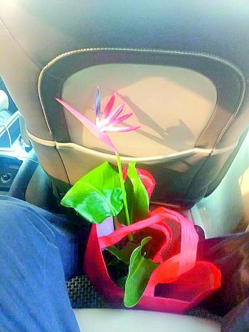济南男子买花遇到奇